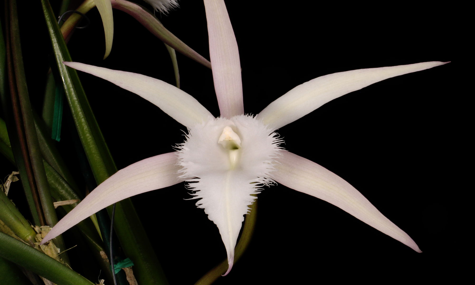 ft lauderdale orchid show 2019 coupons